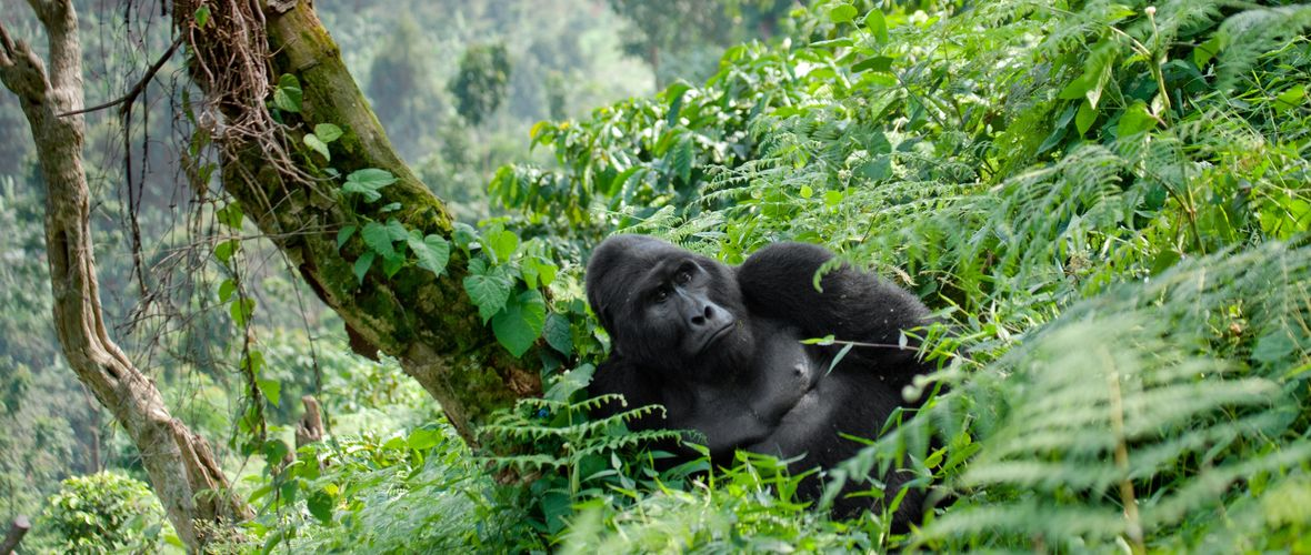 Uganda - Bwindi Impenetrable Forest National Park
